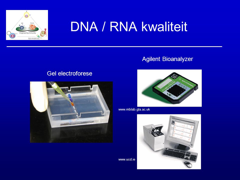 DNA / RNA kwaliteit Agilent Bioanalyzer Gel electroforese 52