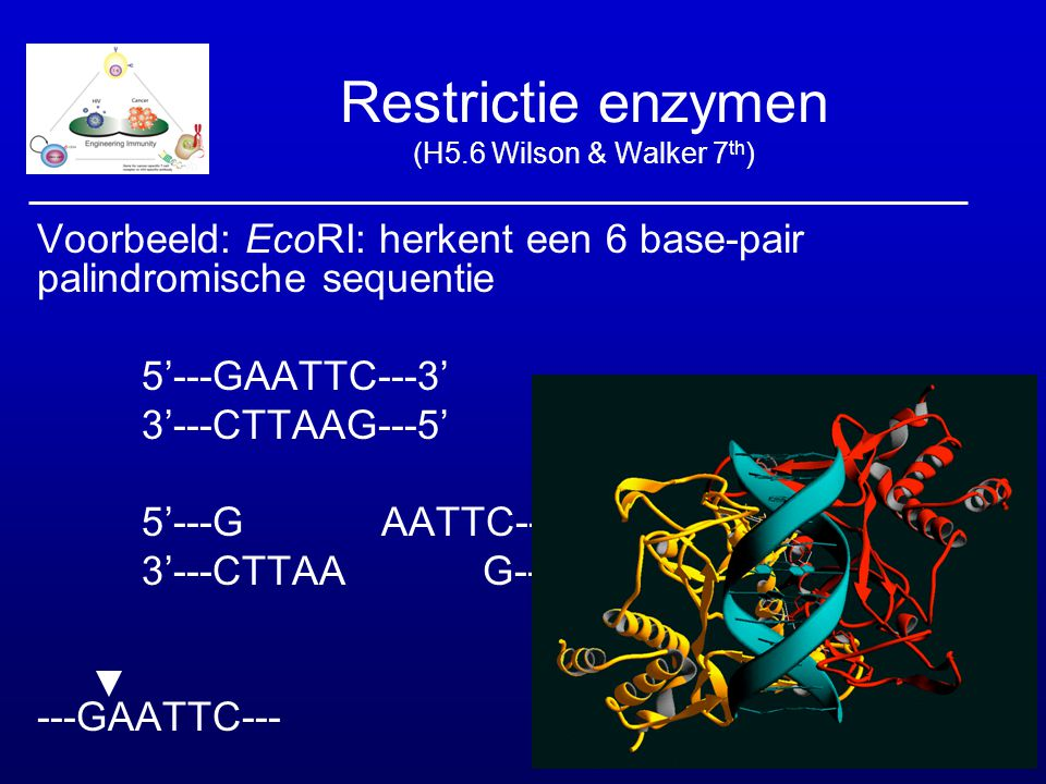 Restrictie enzymen (H5.6 Wilson & Walker 7th)