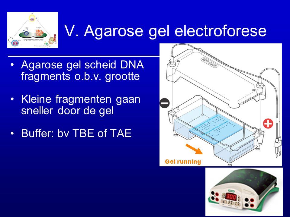 V. Agarose gel electroforese