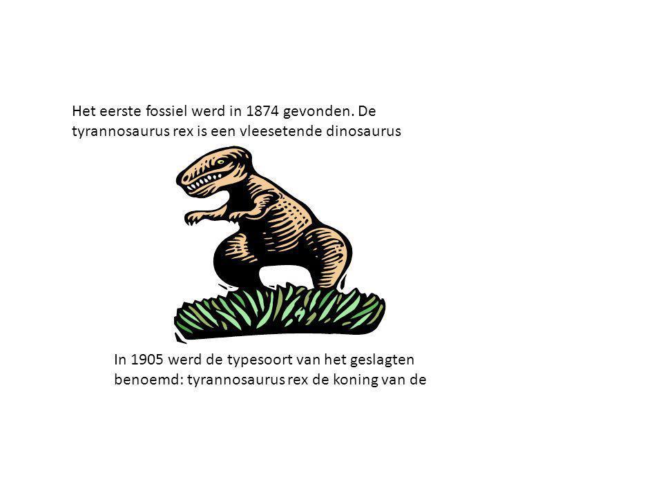 Het eerste fossiel werd in 1874 gevonden