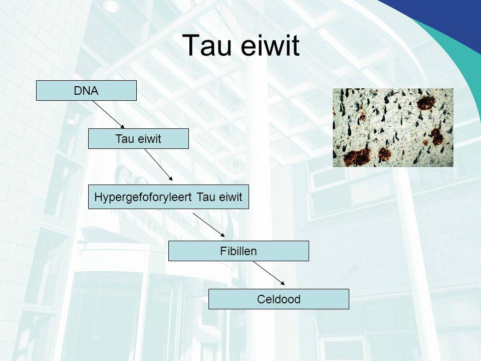 Hypergefoforyleert Tau eiwit