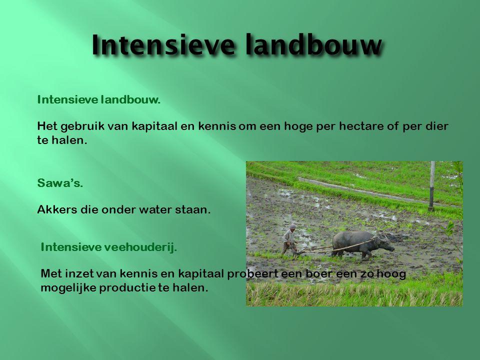 Intensieve landbouw Intensieve landbouw.