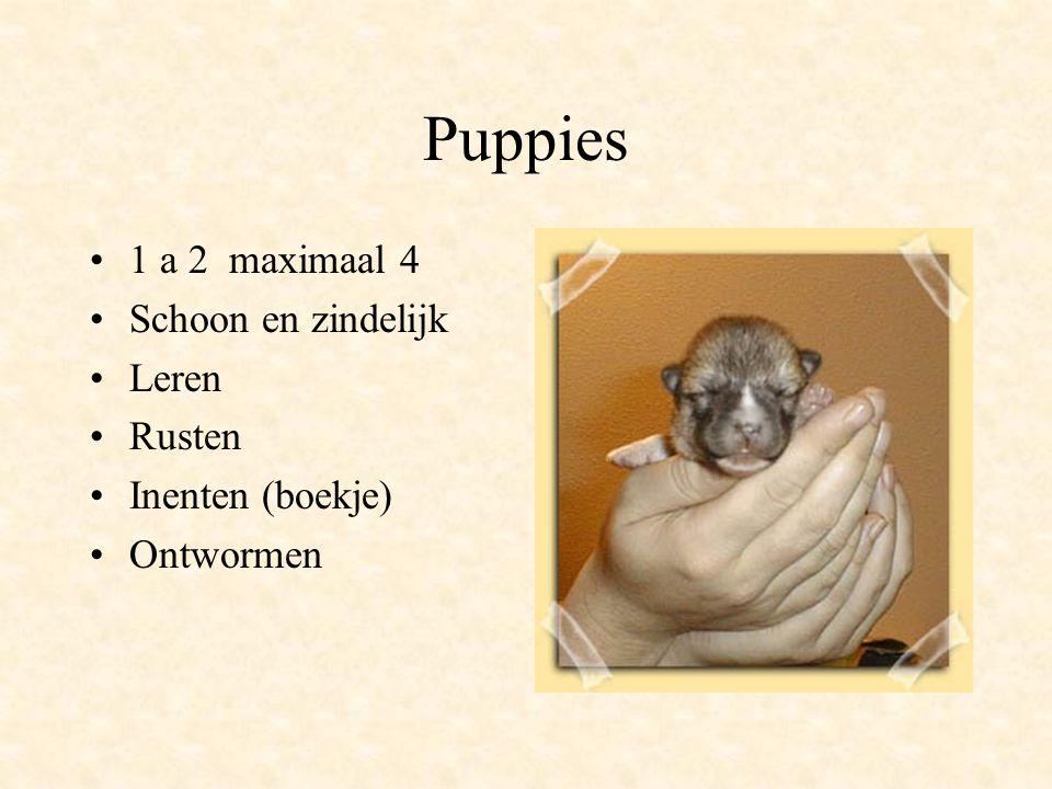 Puppies 1 a 2 maximaal 4 Schoon en zindelijk Leren Rusten