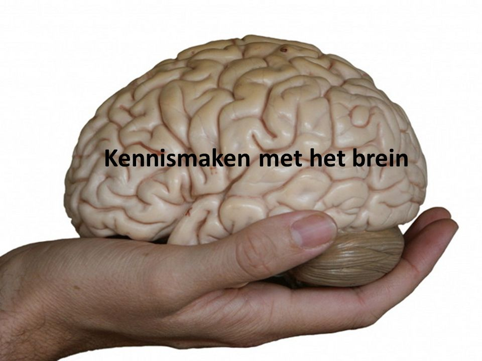 Kennismaken met het brein