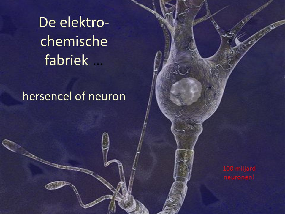 De elektro-chemische fabriek … hersencel of neuron