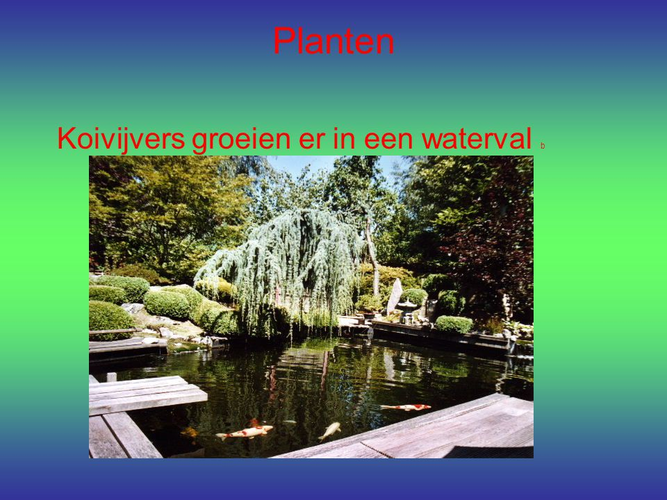 Planten Koivijvers groeien er in een waterval b