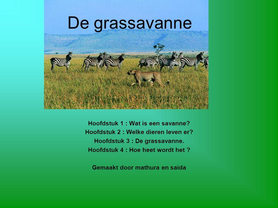 De grassavanne Hoofdstuk 1 : Wat is een savanne