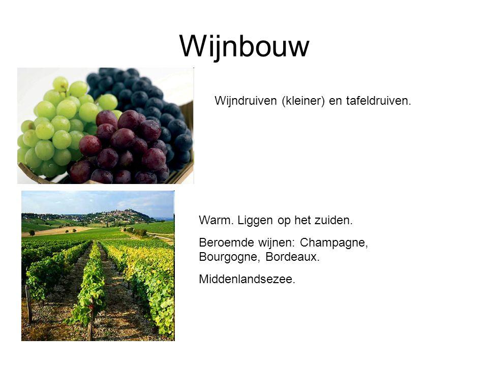 Wijnbouw Wijndruiven (kleiner) en tafeldruiven.