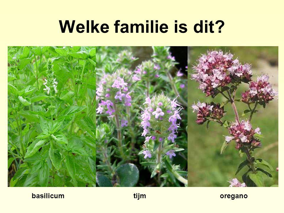 Welke familie is dit basilicum tijm oregano