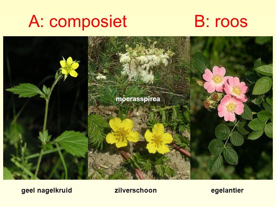 A: composiet B: roos moerasspirea geel nagelkruid zilverschoon