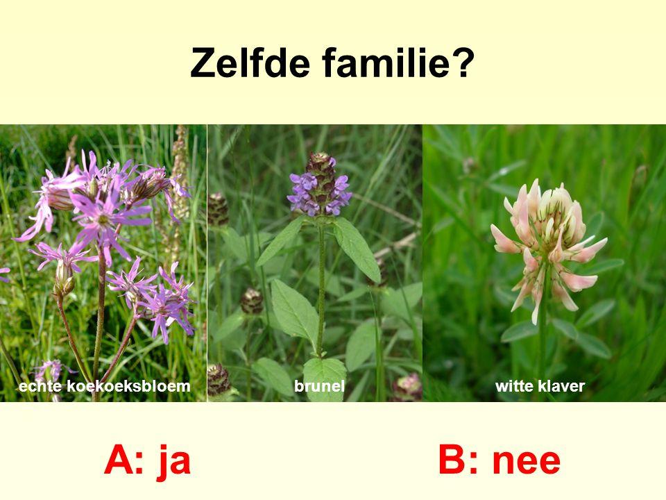 Zelfde familie A: ja B: nee