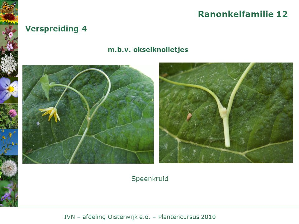 IVN – afdeling Oisterwijk e.o. – Plantencursus 2010