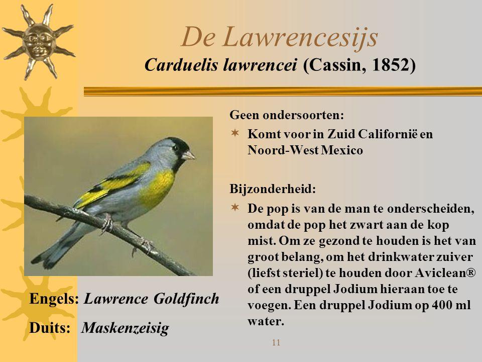 De Lawrencesijs Carduelis lawrencei (Cassin, 1852)