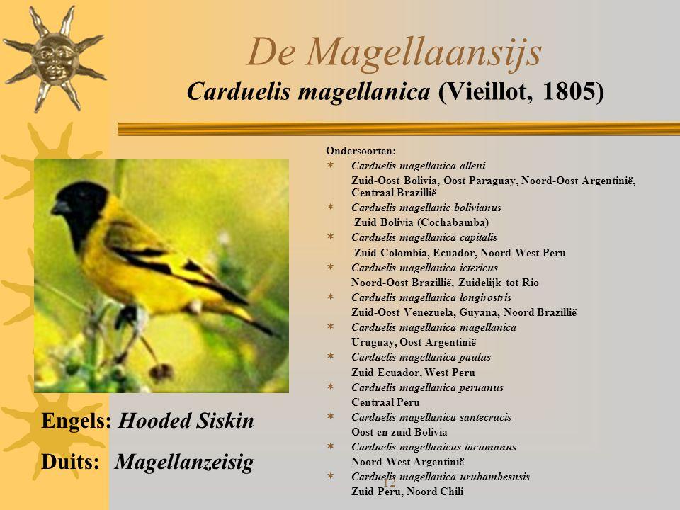 De Magellaansijs Carduelis magellanica (Vieillot, 1805)