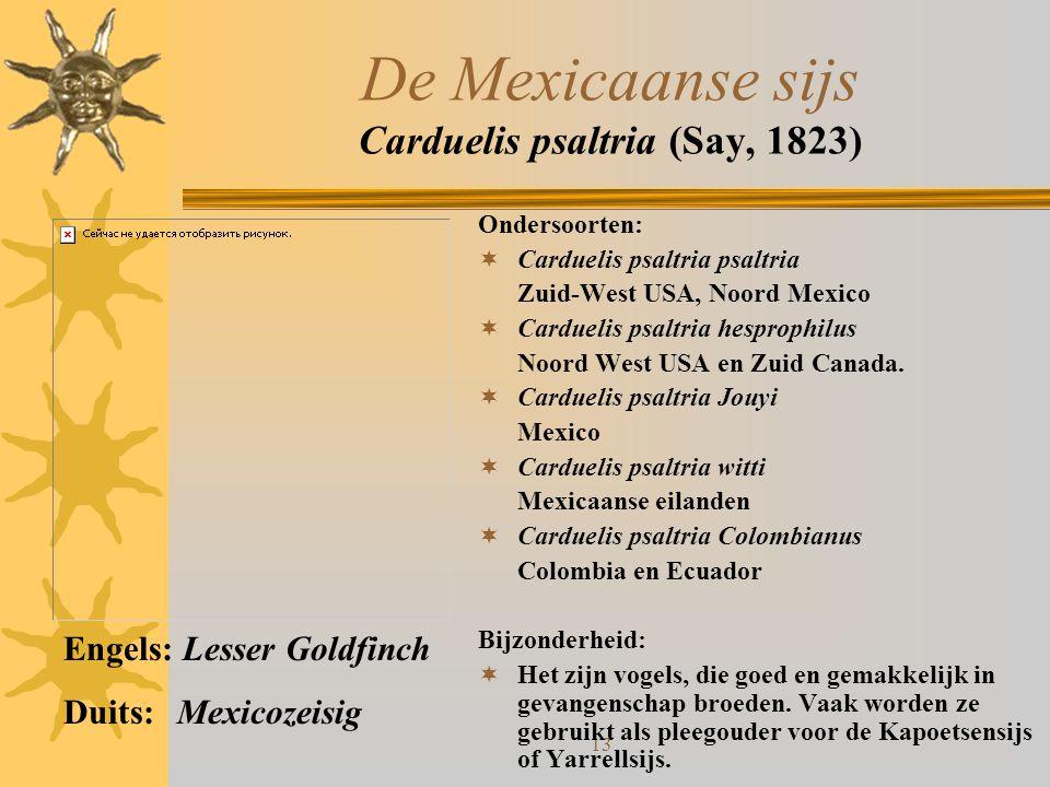De Mexicaanse sijs Carduelis psaltria (Say, 1823)