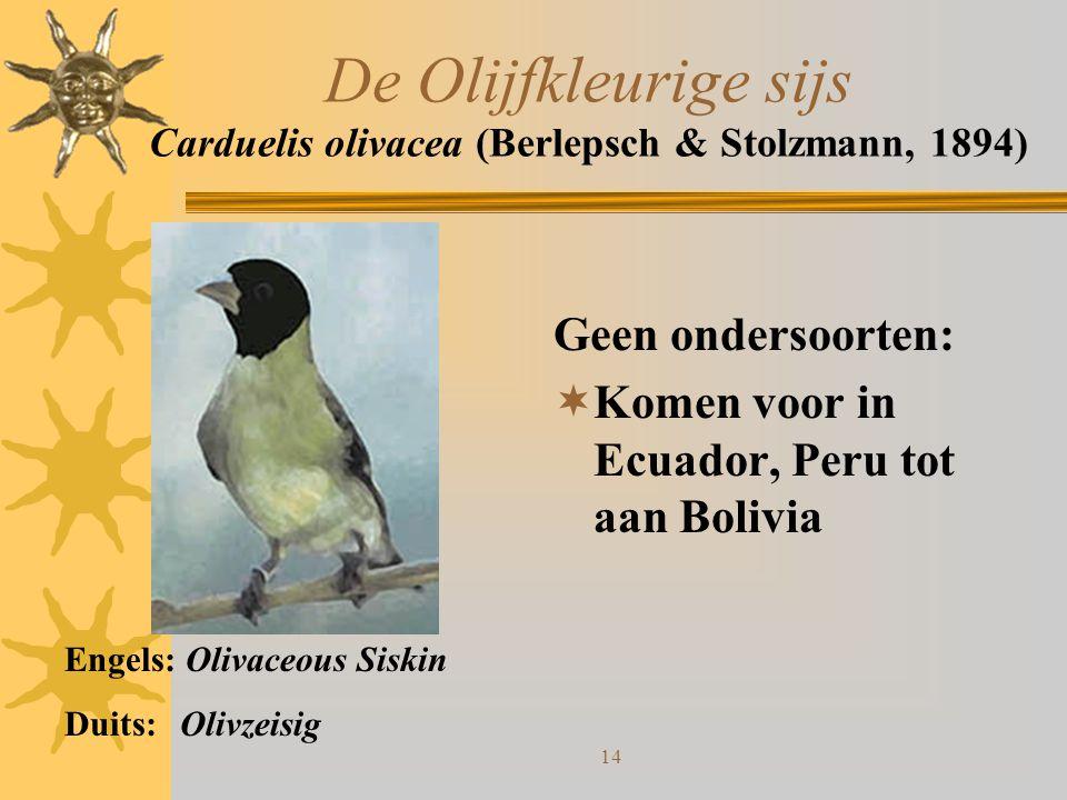 De Olijfkleurige sijs Carduelis olivacea (Berlepsch & Stolzmann, 1894)