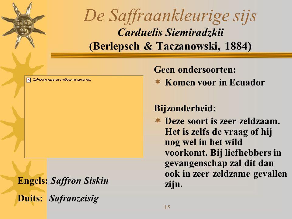 De Saffraankleurige sijs Carduelis Siemiradzkii (Berlepsch & Taczanowski, 1884)