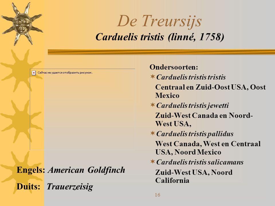 De Treursijs Carduelis tristis (linné, 1758)