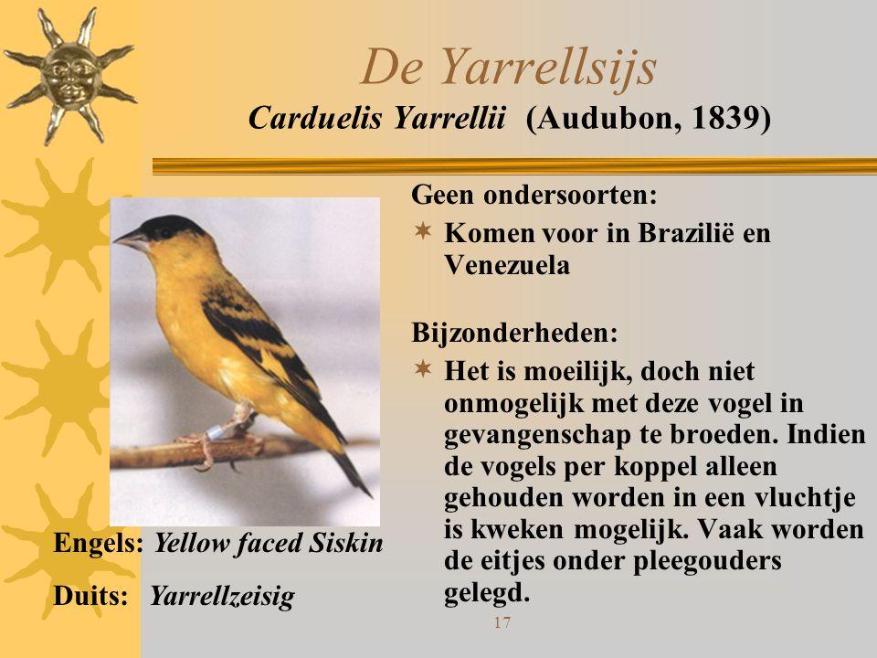 De Yarrellsijs Carduelis Yarrellii (Audubon, 1839)