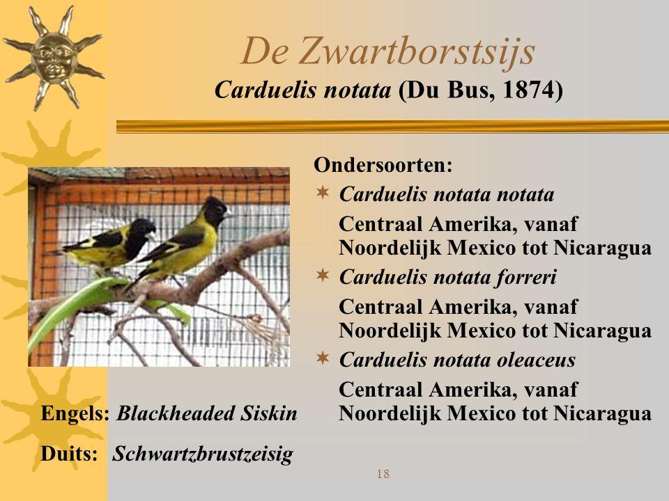 De Zwartborstsijs Carduelis notata (Du Bus, 1874)