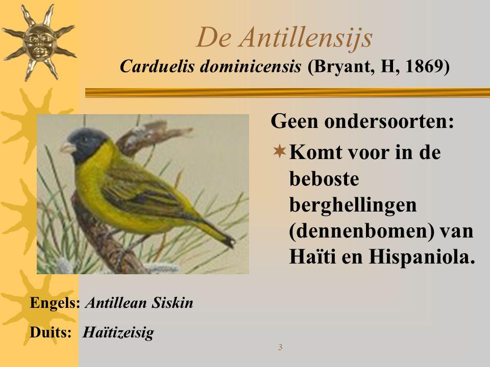 De Antillensijs Carduelis dominicensis (Bryant, H, 1869)
