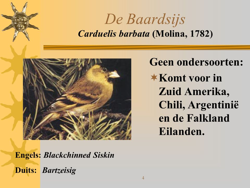 De Baardsijs Carduelis barbata (Molina, 1782)