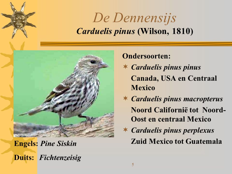 De Dennensijs Carduelis pinus (Wilson, 1810)