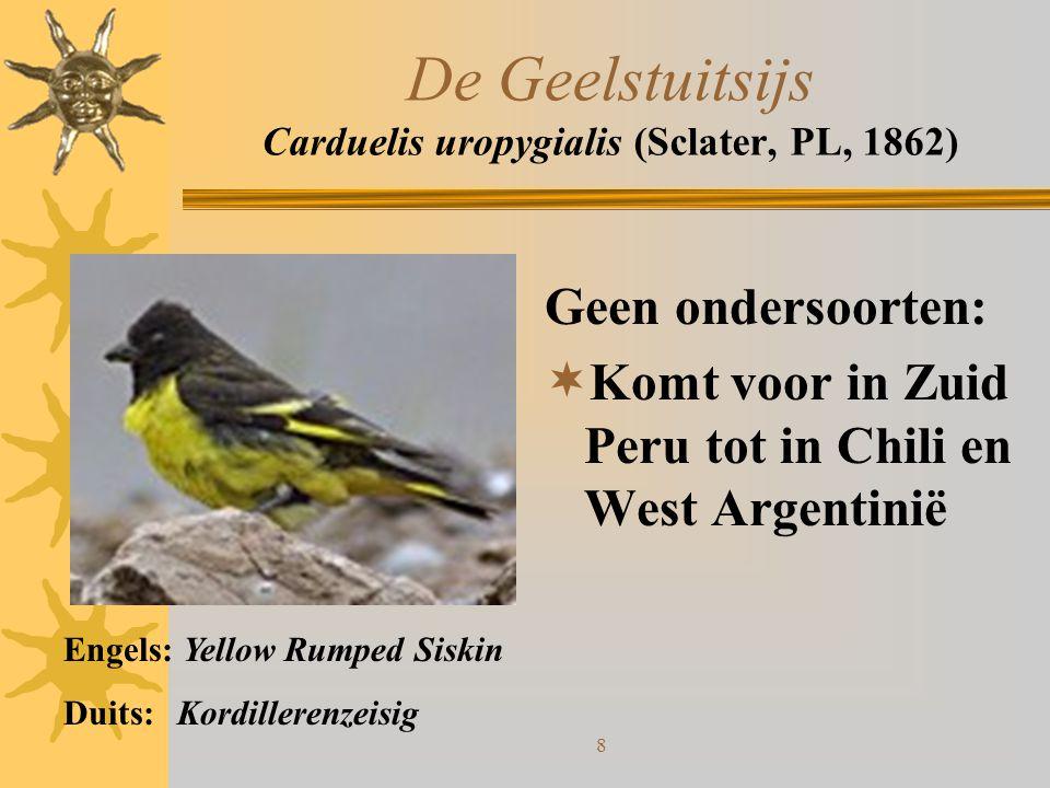 De Geelstuitsijs Carduelis uropygialis (Sclater, PL, 1862)