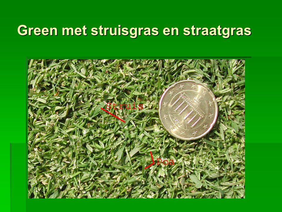 Green met struisgras en straatgras