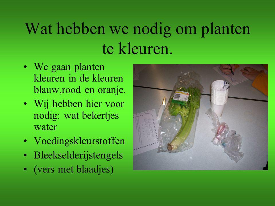 Wat hebben we nodig om planten te kleuren.