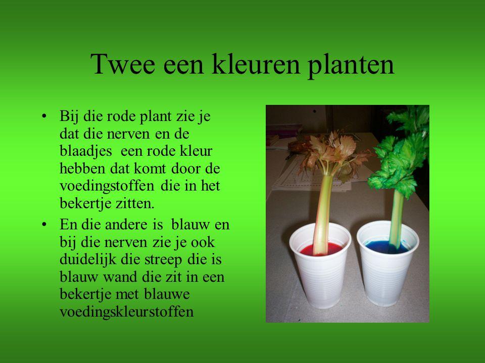 Twee een kleuren planten
