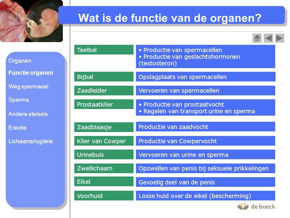 Wat is de functie van de organen