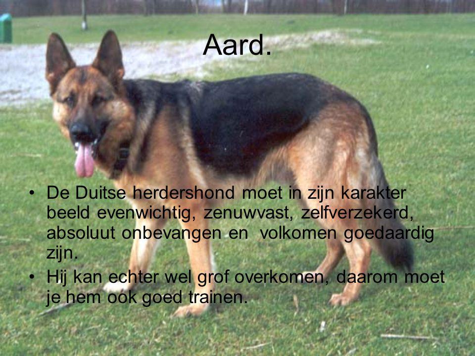 Aard. De Duitse herdershond moet in zijn karakter beeld evenwichtig, zenuwvast, zelfverzekerd, absoluut onbevangen en volkomen goedaardig zijn.
