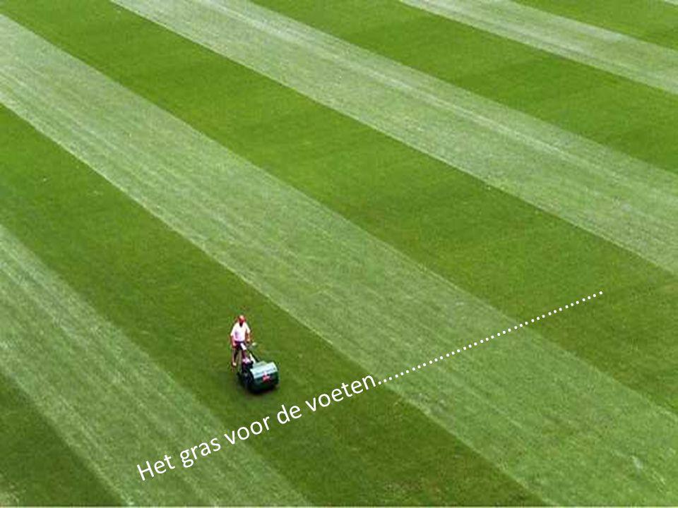 Het gras voor de voeten………………………………….