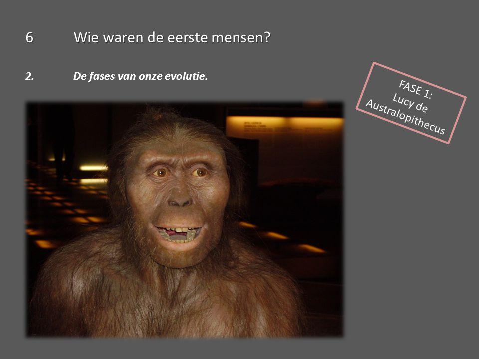 FASE 1: Lucy de Australopithecus