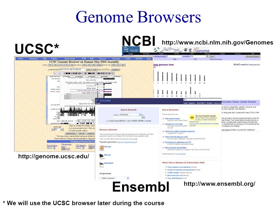 * We will use the UCSC browser later during the course