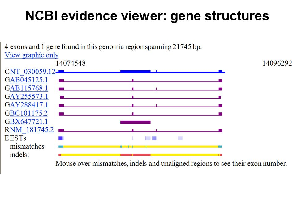 NCBI evidence viewer: gene structures