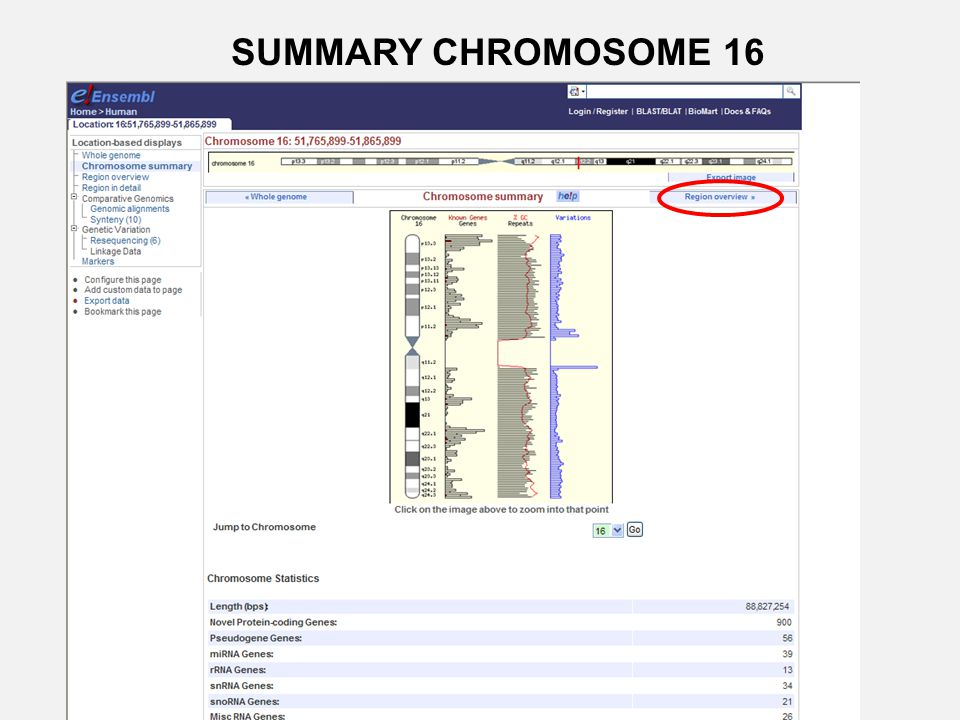 SUMMARY CHROMOSOME 16