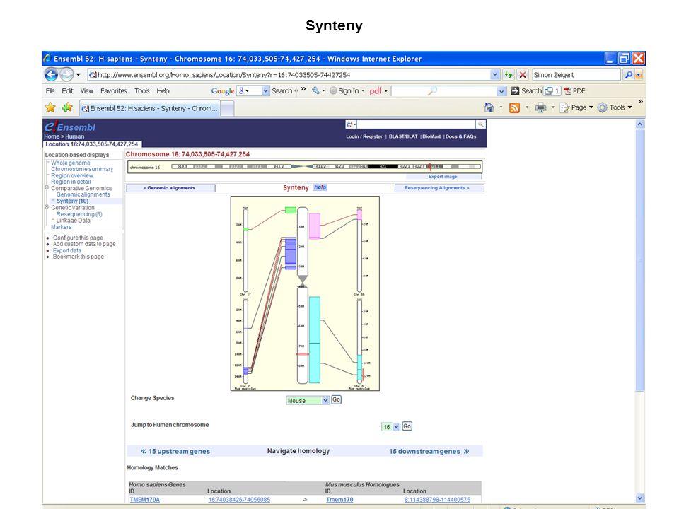 Synteny