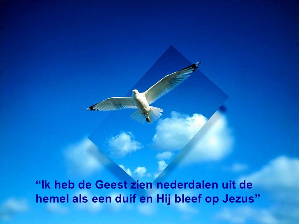 Ik heb de Geest zien nederdalen uit de hemel als een duif en Hij bleef op Jezus