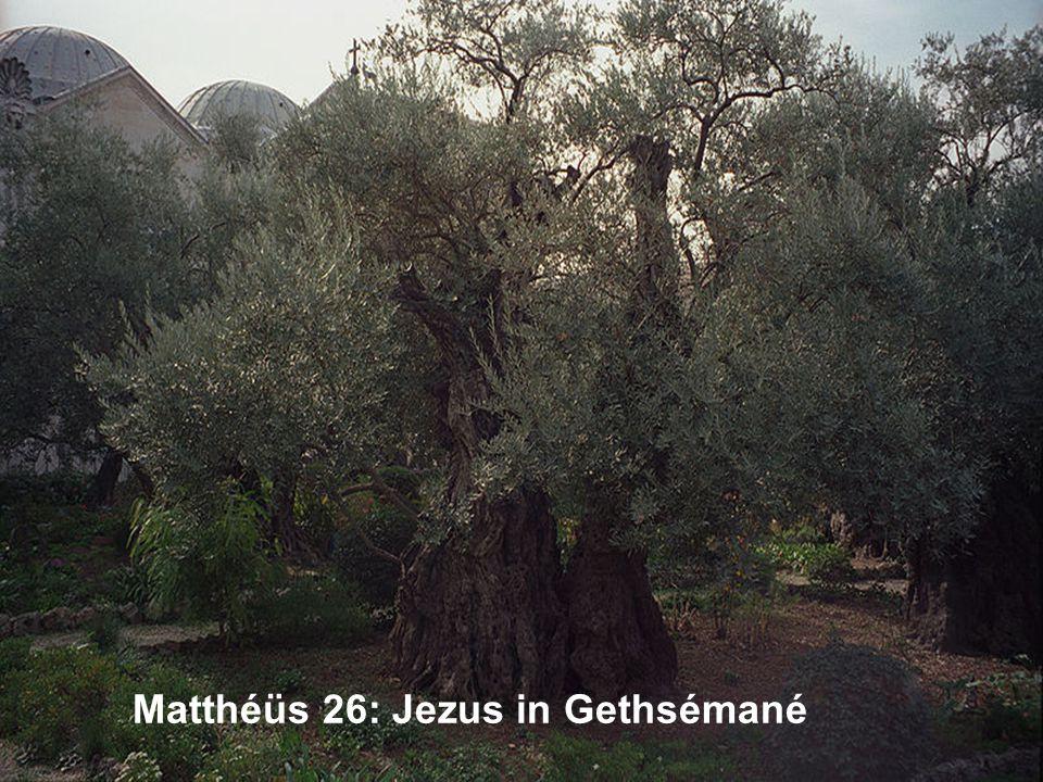 Matthéüs 26: Jezus in Gethsémané