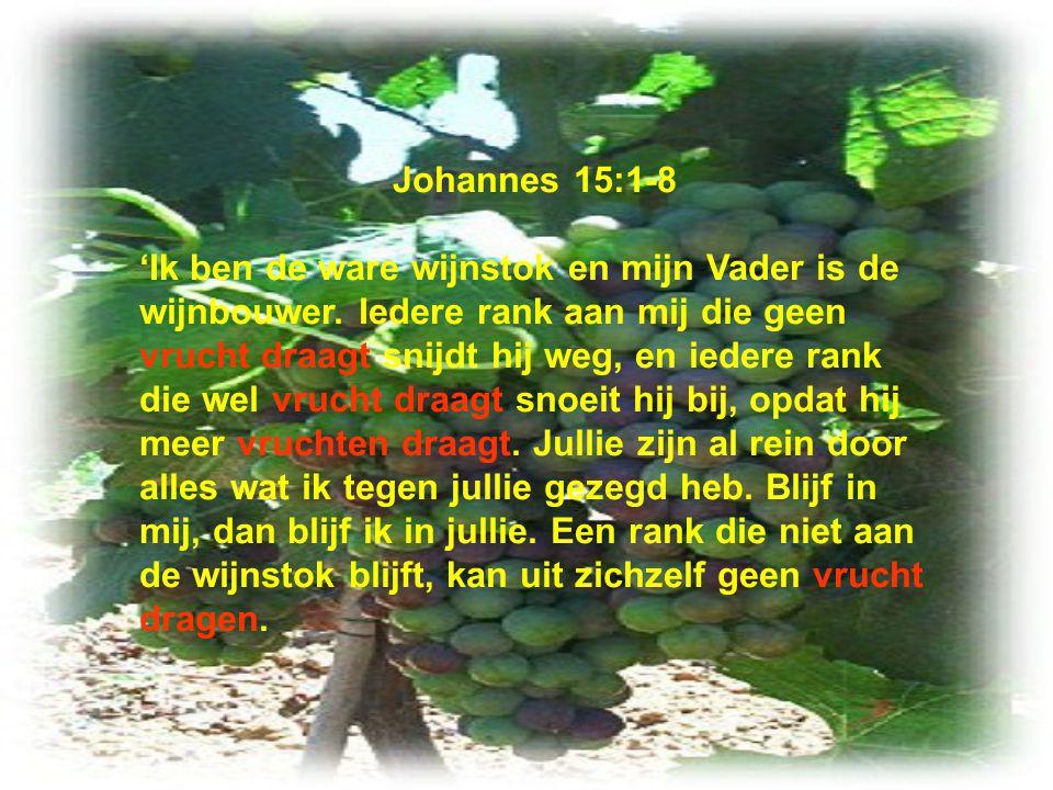 Johannes 15:1-8