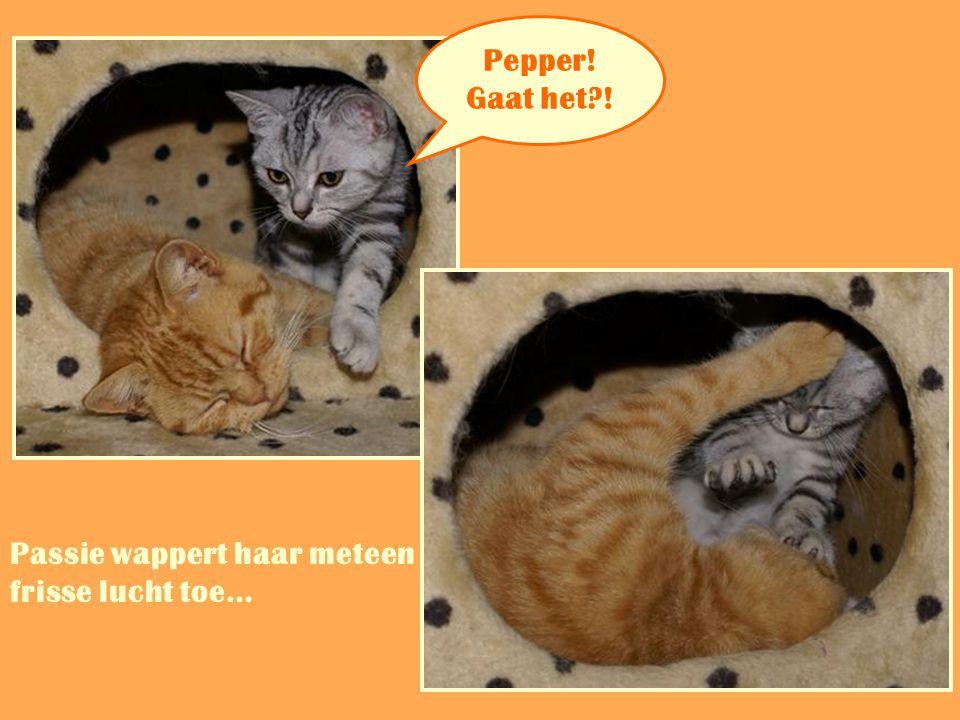 Pepper! Gaat het ! Passie wappert haar meteen frisse lucht toe… …