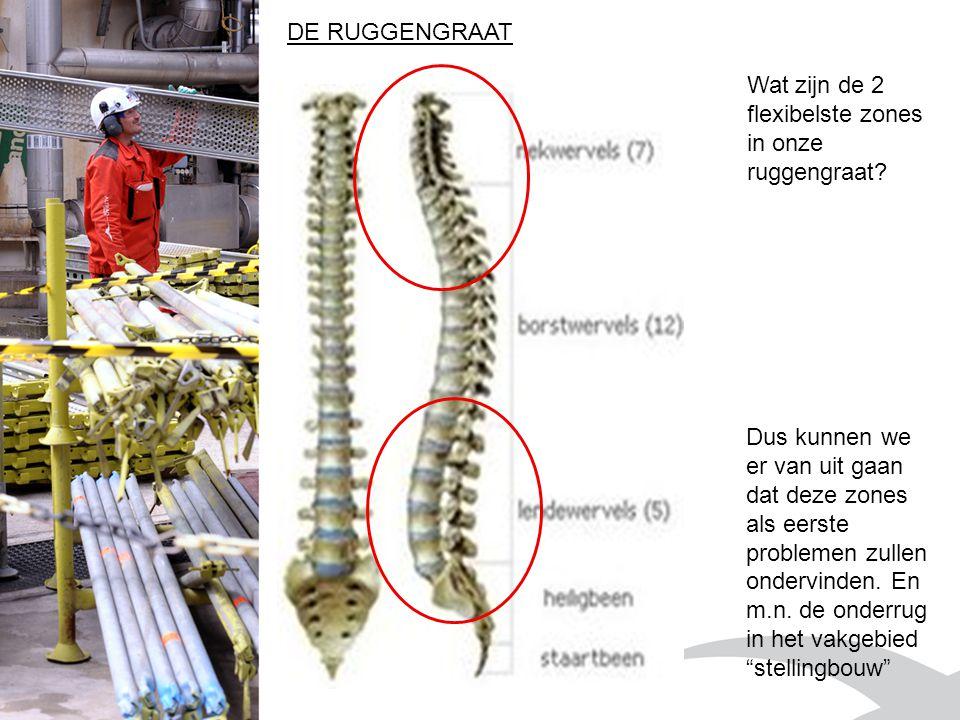 DE RUGGENGRAAT Wat zijn de 2 flexibelste zones in onze ruggengraat