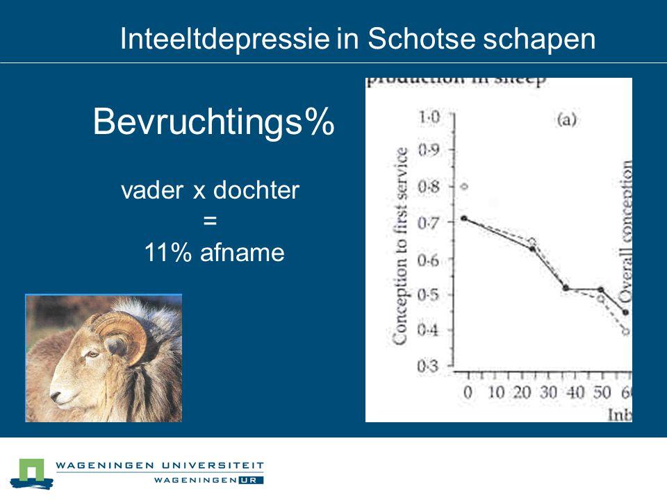 Inteeltdepressie in Schotse schapen