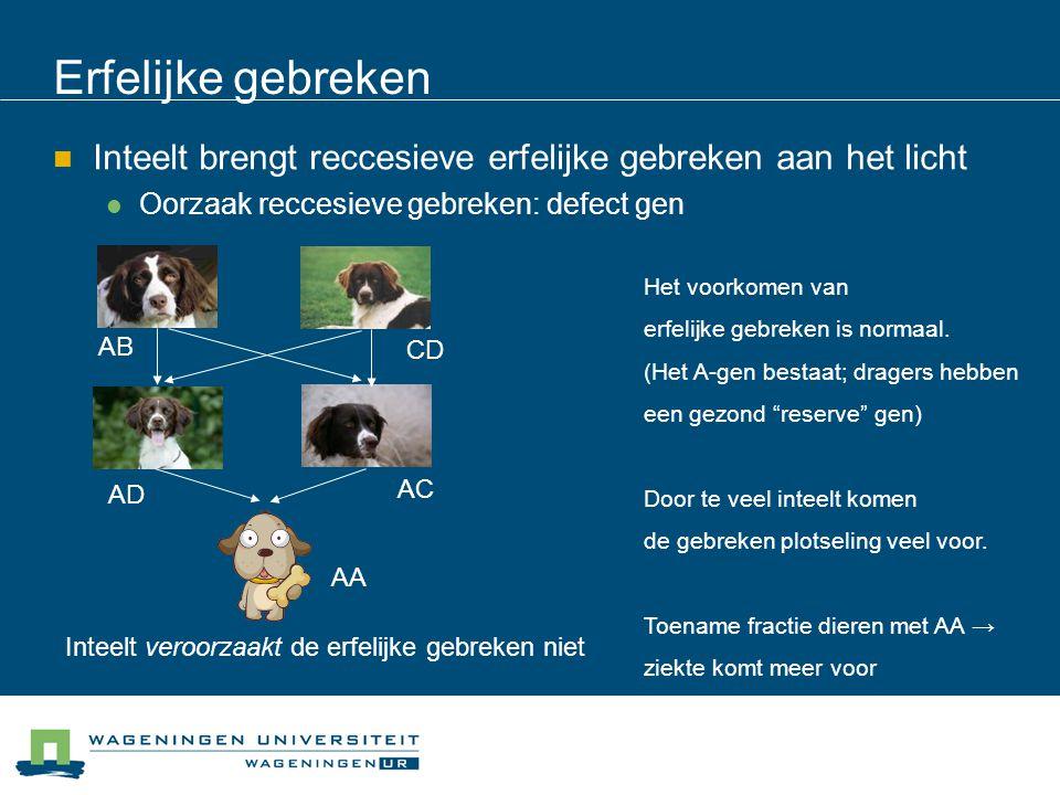 Erfelijke gebreken Inteelt brengt reccesieve erfelijke gebreken aan het licht. Oorzaak reccesieve gebreken: defect gen.
