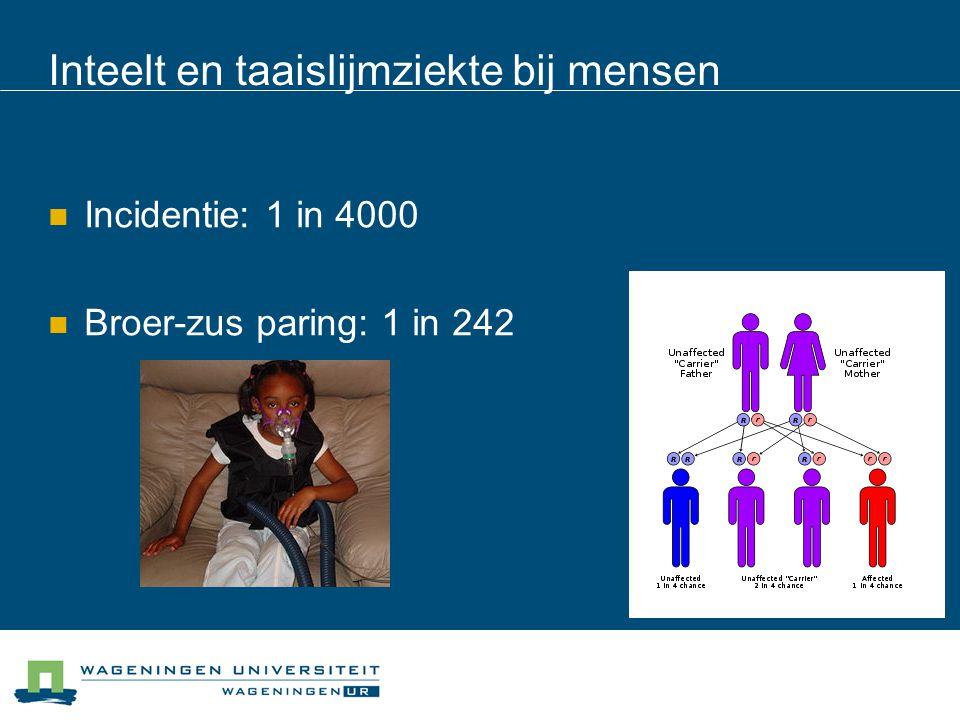 Inteelt en taaislijmziekte bij mensen