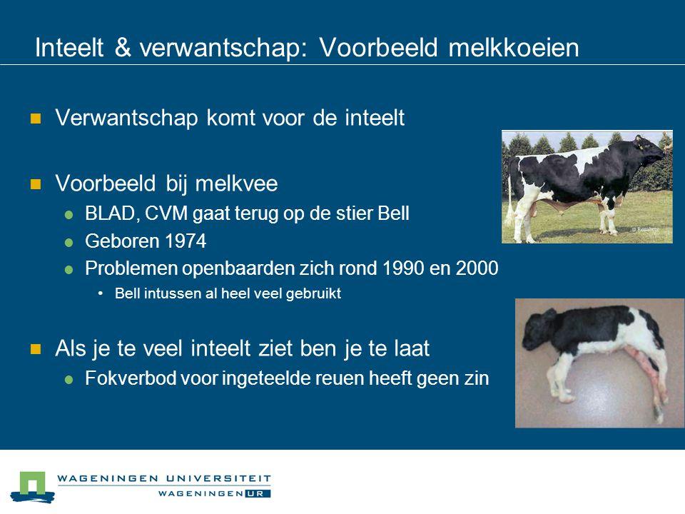 Inteelt & verwantschap: Voorbeeld melkkoeien