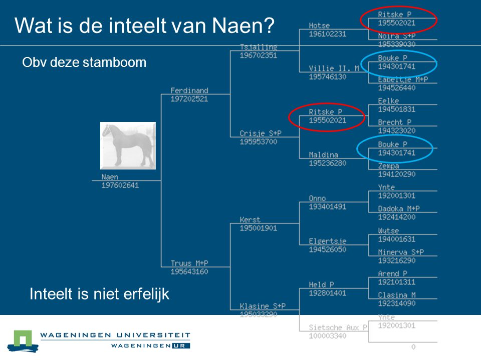 Wat is de inteelt van Naen