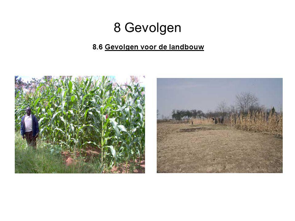 8 Gevolgen 8.6 Gevolgen voor de landbouw